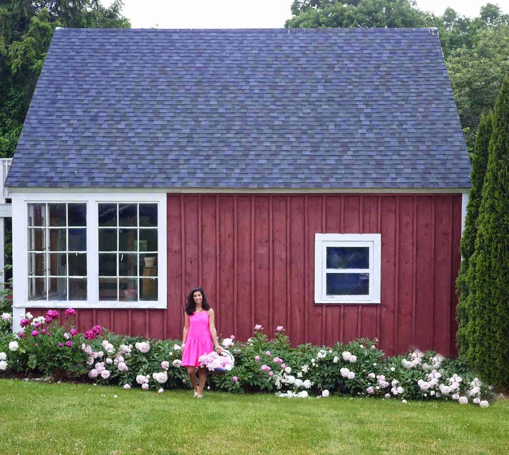 Pink Peonies and New England Red Barn