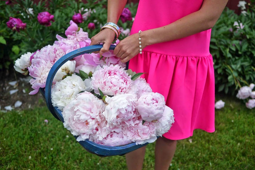 Basket of Pink Peonies and Pink Dress