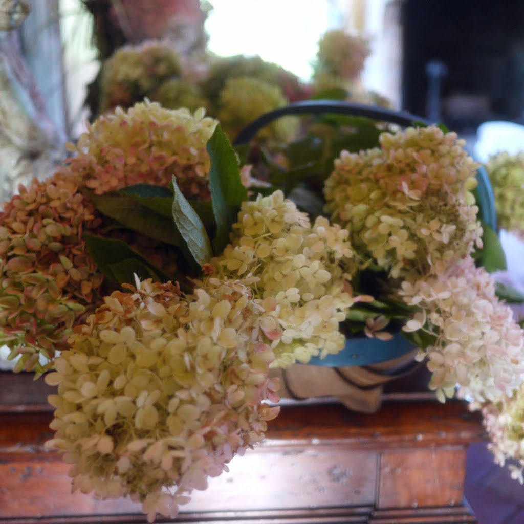 PG hydrangeas Fall Flower Arranging