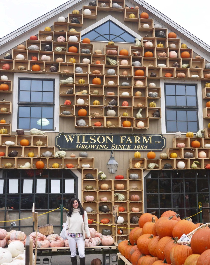 Wilson Farm Pumpkin Display